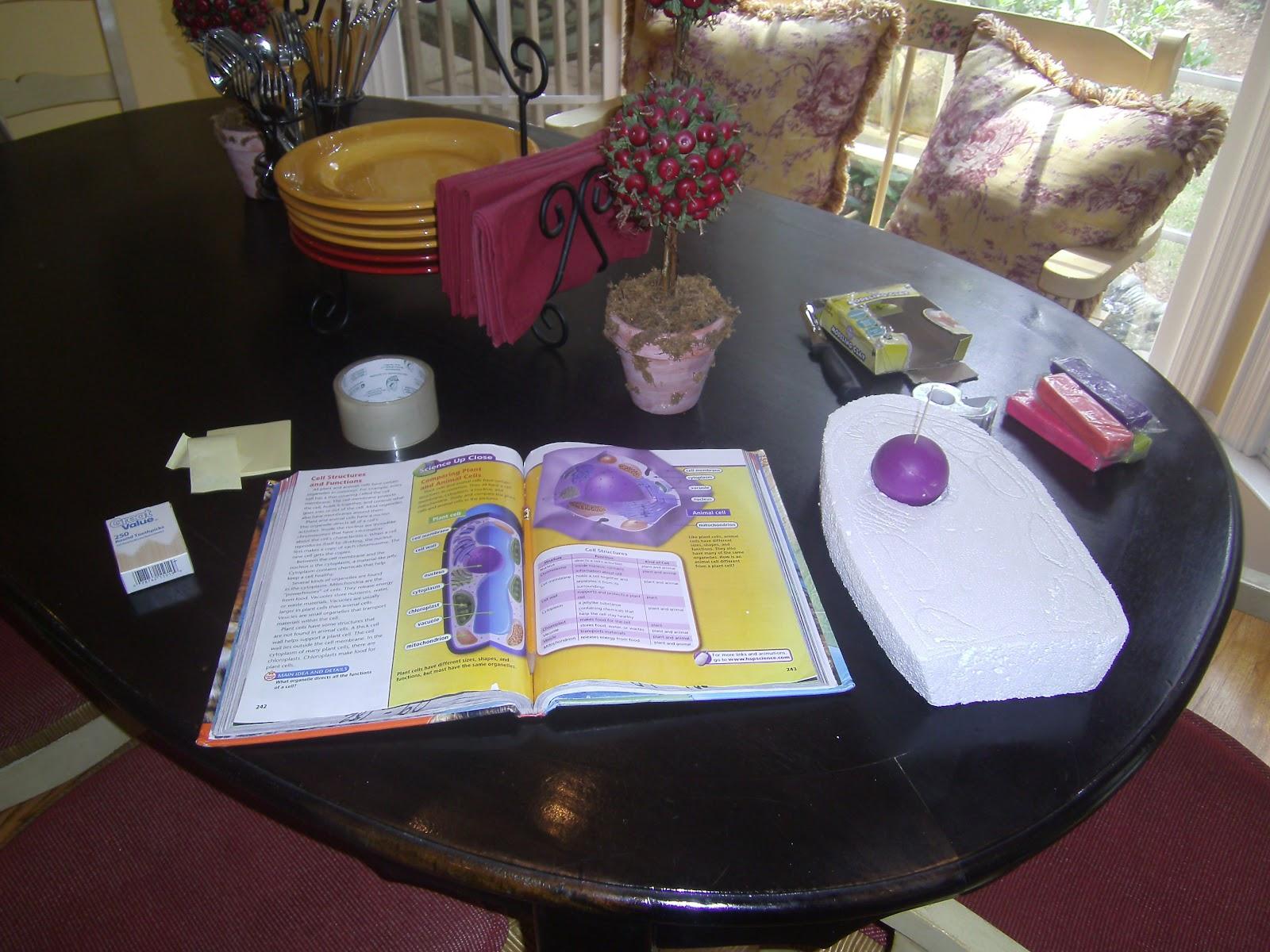 treasures in jars ellies 5th grade science project