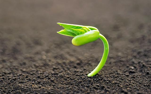 Germinacion de la semilla y biologia