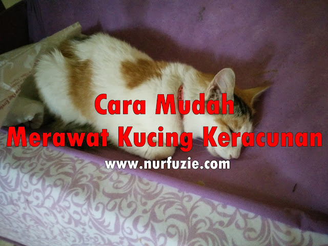 Cara Mudah Merawat Kucing Keracunan