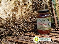 miel sin abejas ecoapi ecoapicultores