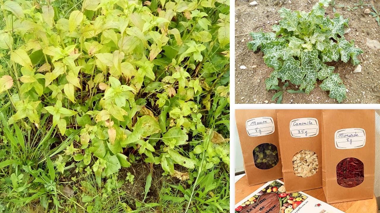 Les plantes aromatiques en vente directe