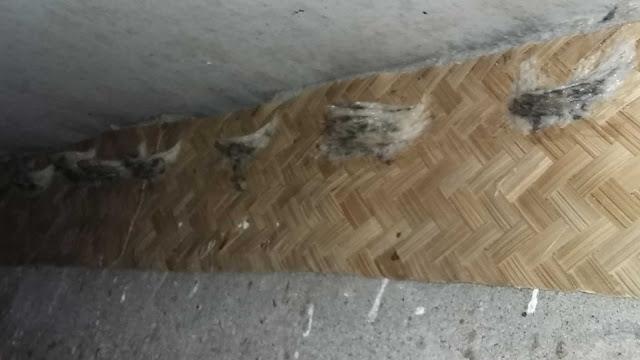 5 Tips Jitu Agar Walet Cepat Menginap di Rumah yang Kita Sediakan besek