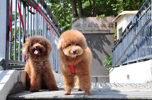 【城市綠州】文化旅館‧翠雅山房 推出寵物友善客房