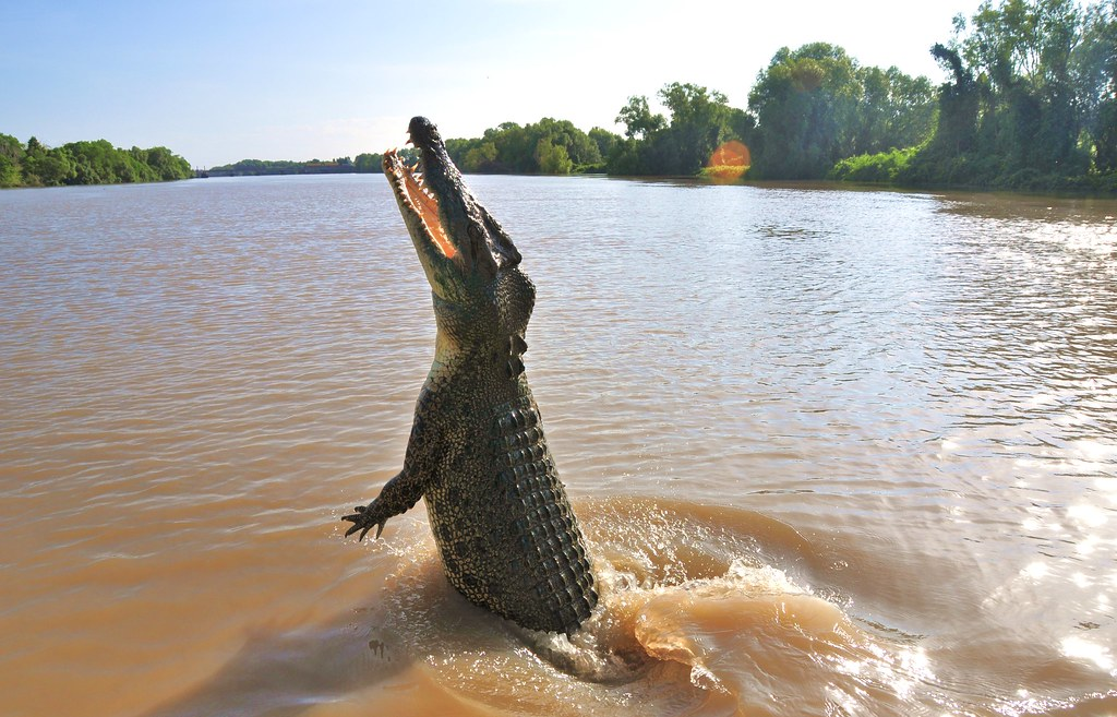 Largest Crocodile in the World - Lolong Of Philippines