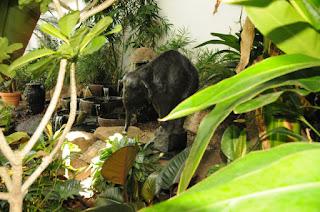 Cheyenne Botanic Gardens - elephant