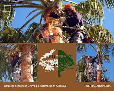 Limpieza de troncos y ramaje de palmeras en Alboraya