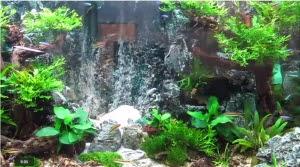 Hồ thủy sinh trọn bộ - suối thác 3