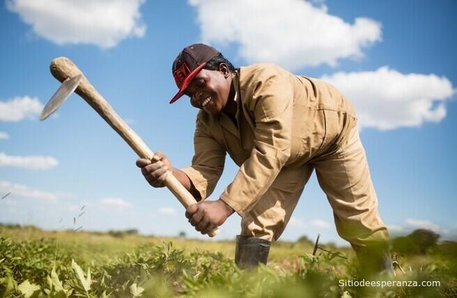 Hombre trabajando en el campo