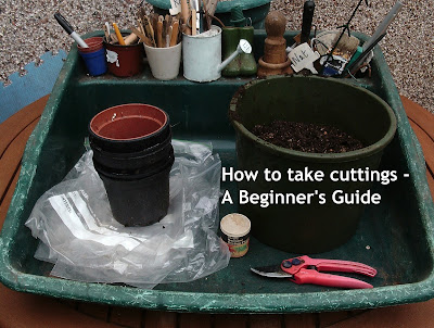 How to take cuttings - A Beginner's Guide Green Fingered Blog