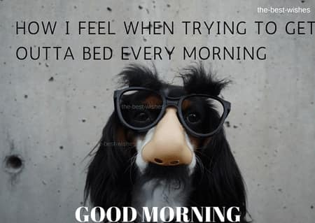Good morning meme for him with stylish dog hair images
