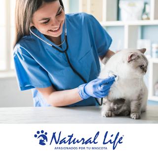 Veterinarias en Capital Federal que regalan gatitos