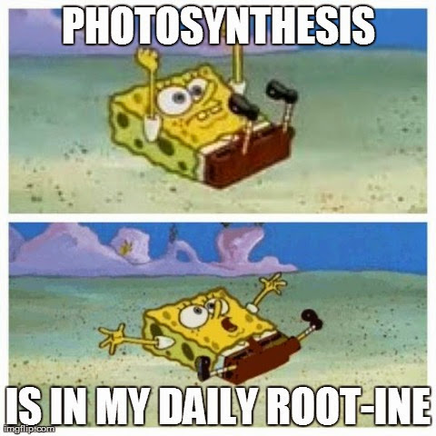Photosynthesis is in my daily root-ine.