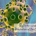 Avoid the coronavirus (Prevention of The Coronavirus)