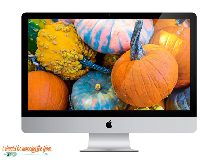 Multicolor Pumpkins