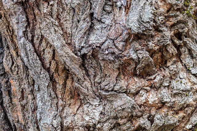 Free Tree Bark Textures Vol 3 - 5