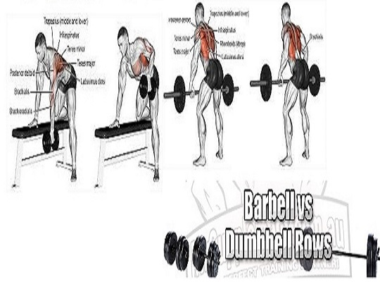 Barbell row vs. Dumbbell row & Which Is Superior?