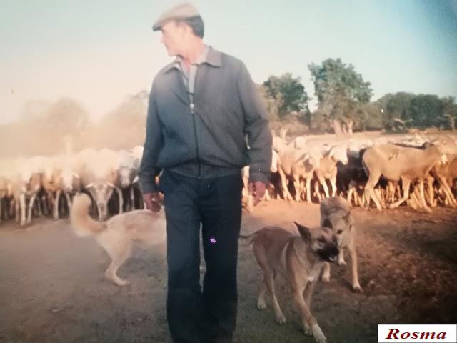 Más pastoreo para el control del medio ambiente