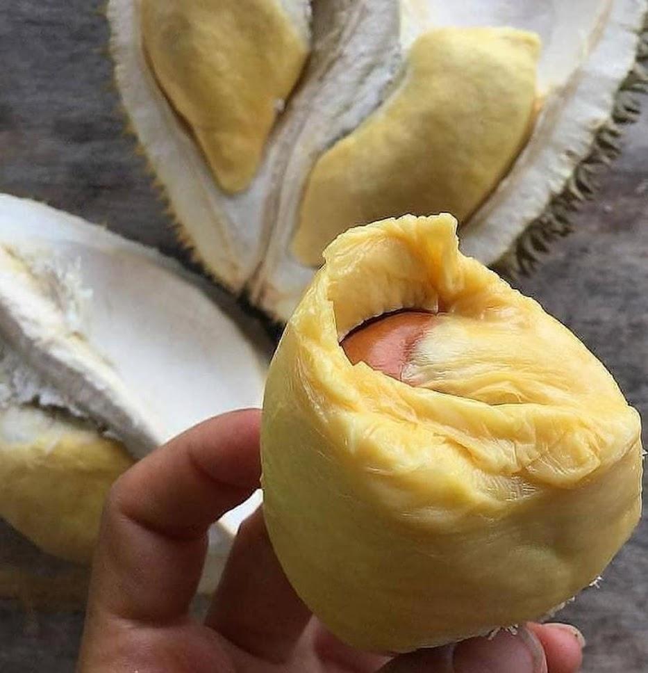 Bibit Durian Musangking Kaki 3 Pematangsiantar