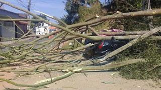 Queda de arvore na Vila Romão em Registro-SP destrói veiculo estacionado