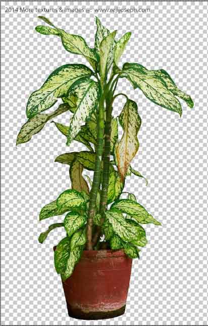 PNG Garden Plant Texture 00003