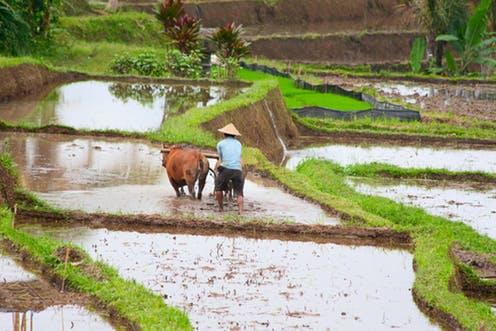 RUU Sistem Budi Daya Pertanian Berkelanjutan Diharapkan Tambah Jumlah Petani