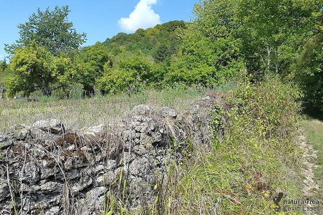 Habitat - Stone Wall