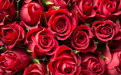 red roses close up widescreen resolution hd wallpaper