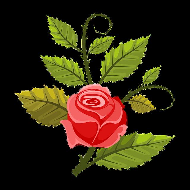 Píntame una rosa roja