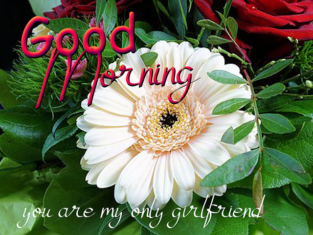 good morning images with rose for whatsapp good morning images in hindi
