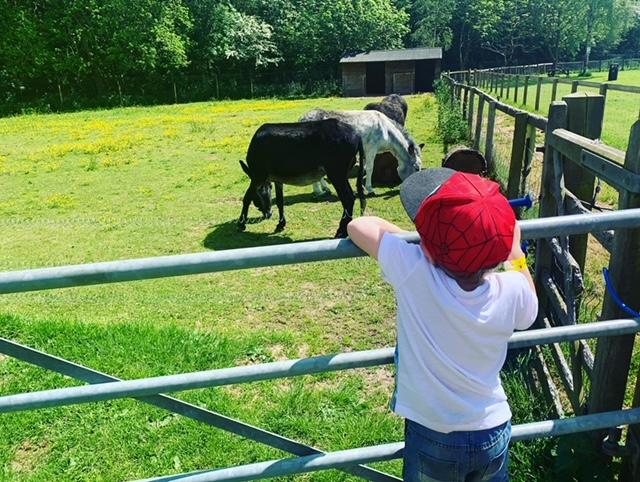 Boy looking at donkeys in a field
