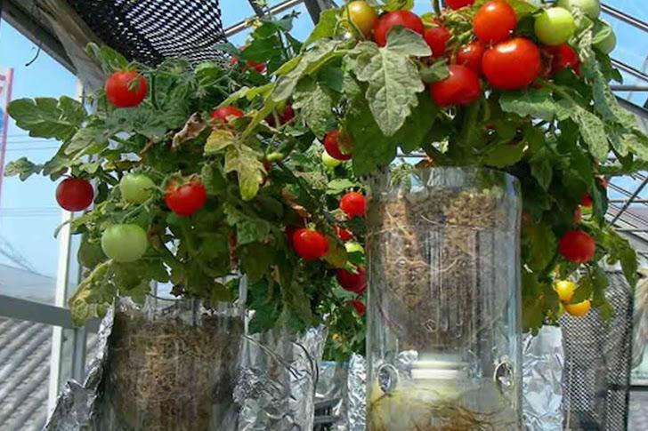 Cara Bertanam Hidroponik Simpel dan Mudah