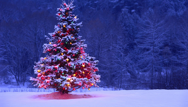 Christmas tree images for whatsapp
