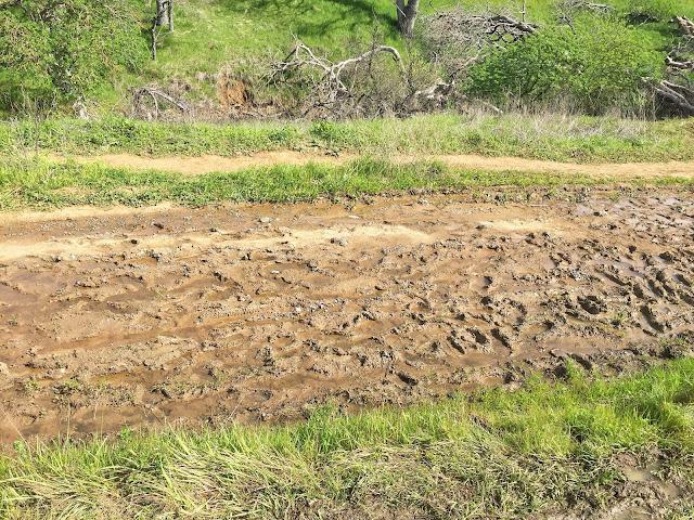 Mt. Diablo Falls Trail Loop hike mud on trail