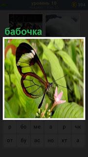 на цветок приземлилась бабочка за нектаром