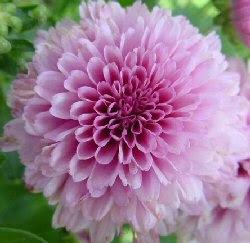 fiori del mio giardino: un bel fiore , tutto per me!