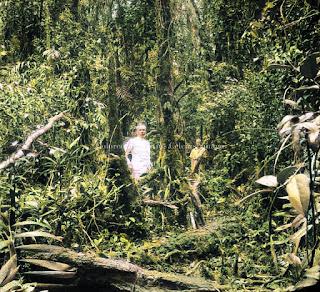 pohon pohon di hutan dairi