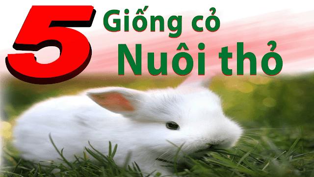 Danh sách các loại giống cỏ nuôi thỏ tốt nhất hiện nay