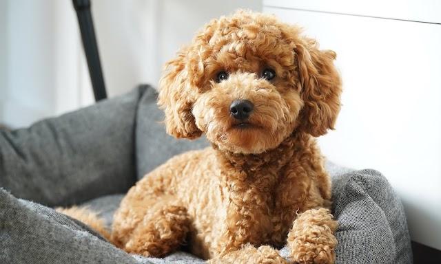 Πως να επιλέξετε την κατάλληλη τροφή για τον σκύλο σας