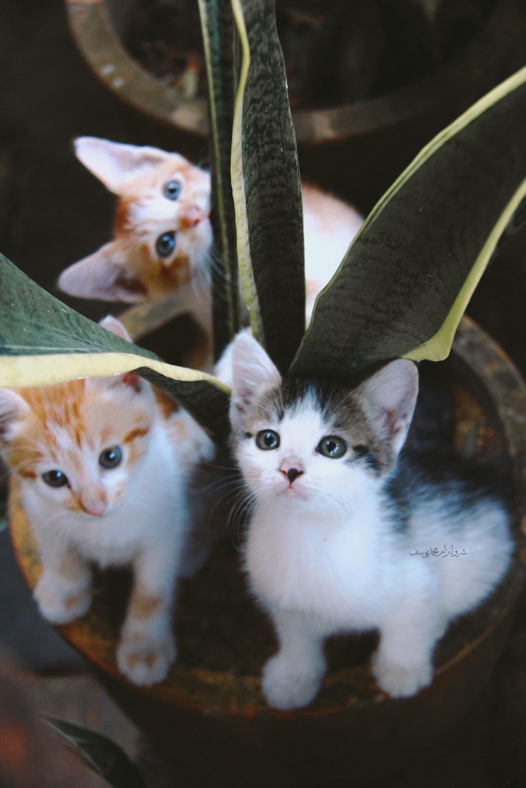 Anak Kucing Yang Comel Dan Riang - 1