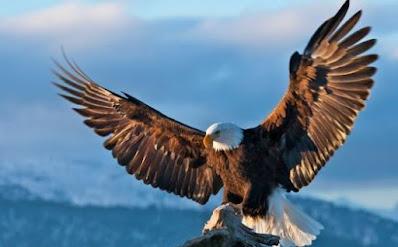 renungan harian rajawali 2019 belajar dari burung rajawali ilustrasi khotbah tentang rajawali filosofi burung rajawali perbedaan rajawali dan elang kisah burung rajawali kristen karakter rajawali renungan rajawali 2020