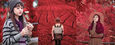 Preset Lightroom | Preset Ligtroom red tone premium xmp free download