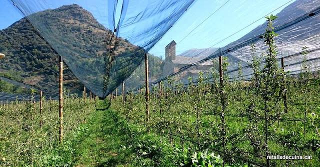 Pomes d'Alta muntanya al Pallars Sobirà