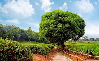 احلى شجرة في العالم