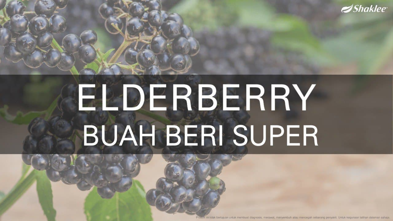 khasiat buah elderberri