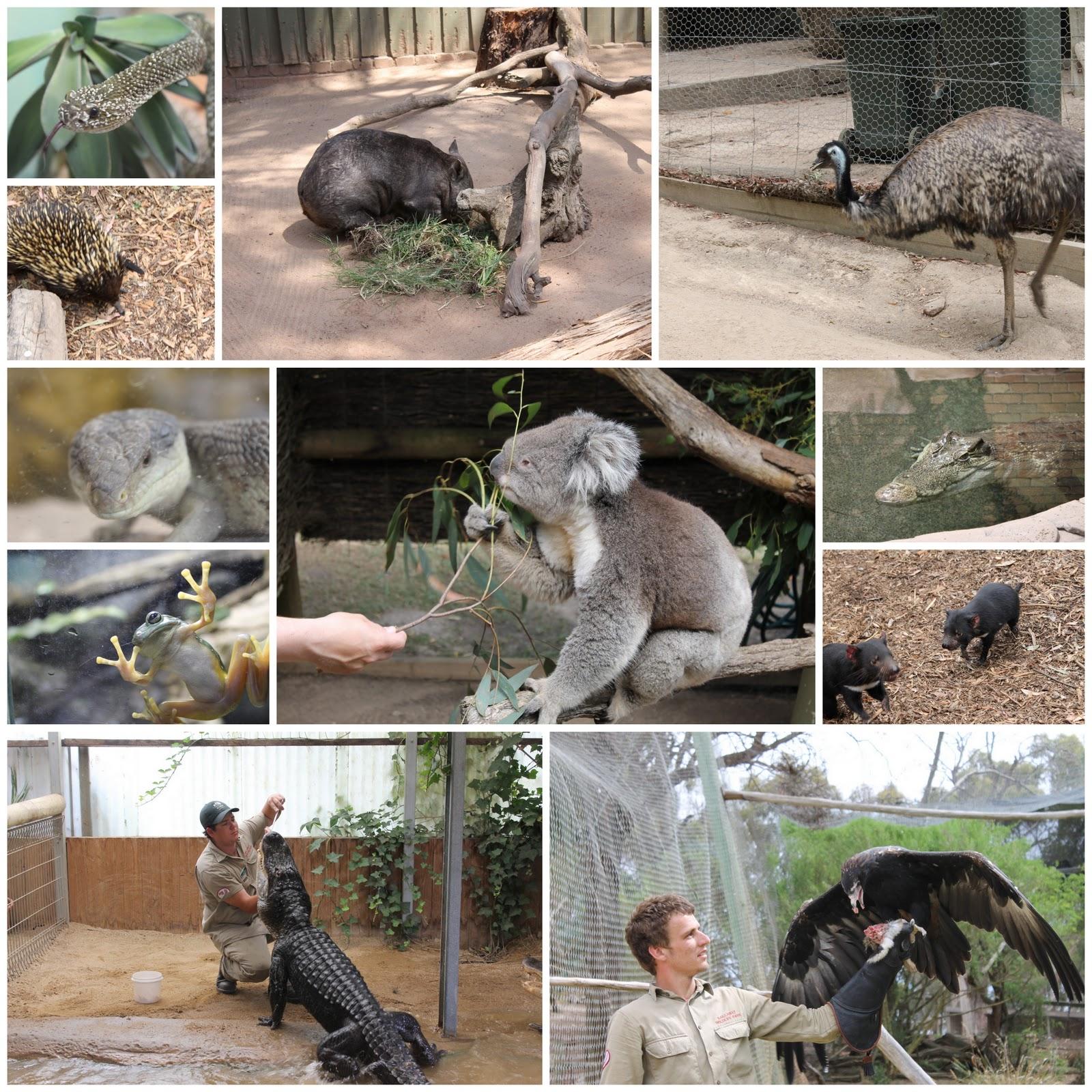 images ballarat wildlife - photo #6