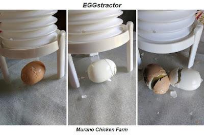 EGGstractor review using farm fresh eggs