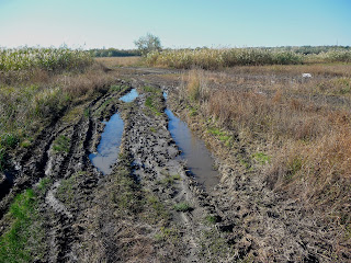 Место впадения реки Сенной в Казённый Торец возле заказника Галина горка