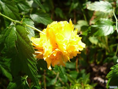秋に咲く黄色い花