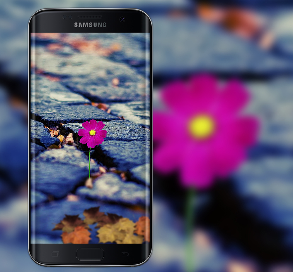 Samsung Wallpaper Flower Gardening Flower And Vegetables