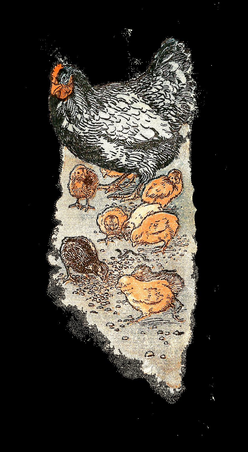 Digital Stamp Design: Bird Downloads Free Hen Chicks Clip ...